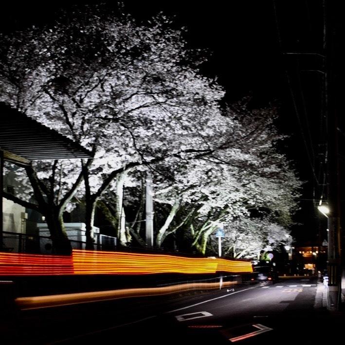 春が来た04_f0099102_11220989.jpg