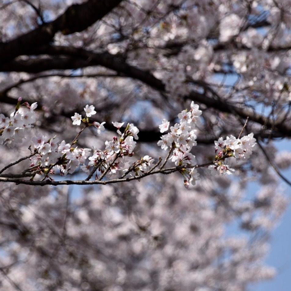 春が来た04_f0099102_11221343.jpg
