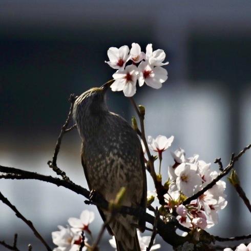 春が来た04_f0099102_11221740.jpg