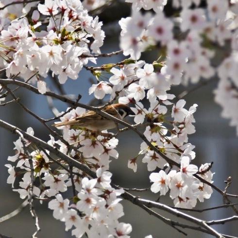 春が来た04_f0099102_11222222.jpg