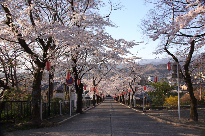 桜参道 _a0357206_18092198.jpg
