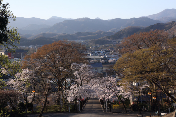 桜参道 _a0357206_18093841.jpg