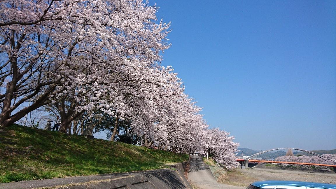 藤枝、瀬戸川の桜♪_b0093515_05353422.jpg