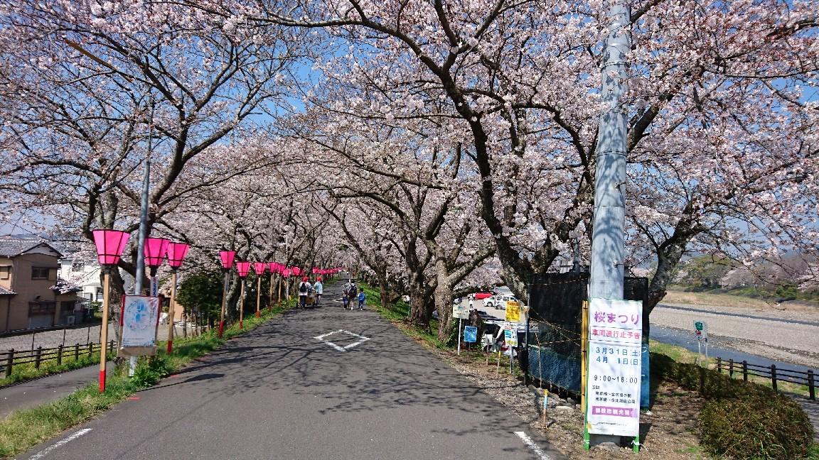 藤枝、瀬戸川の桜♪_b0093515_05373233.jpg