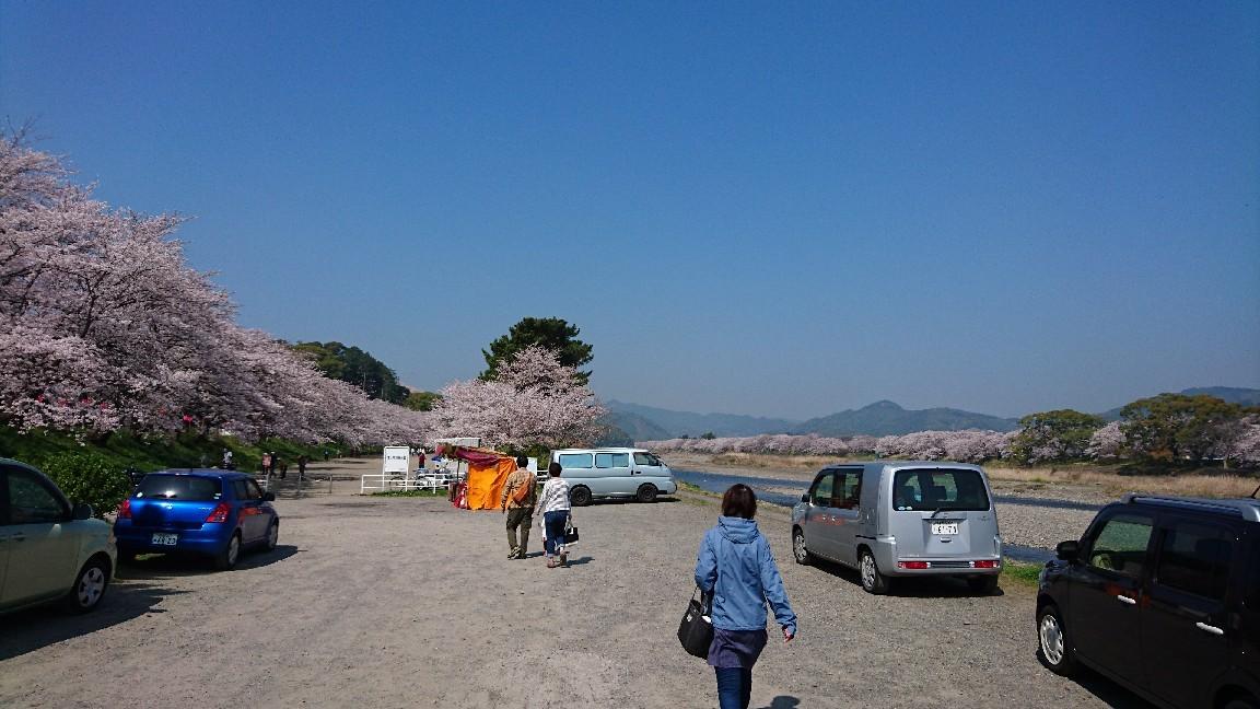藤枝、瀬戸川の桜♪_b0093515_05392959.jpg