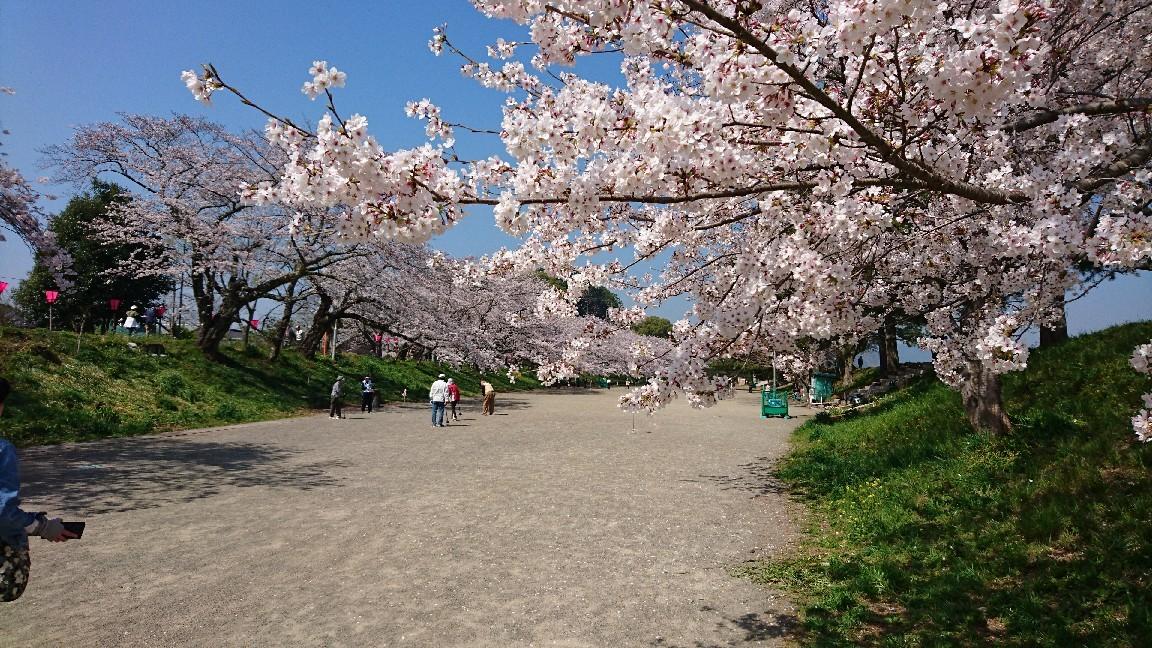 藤枝、瀬戸川の桜♪_b0093515_05414653.jpg