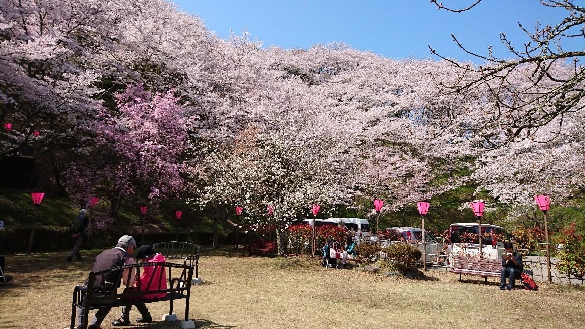 藤枝、瀬戸川の桜♪_b0093515_05423577.jpg