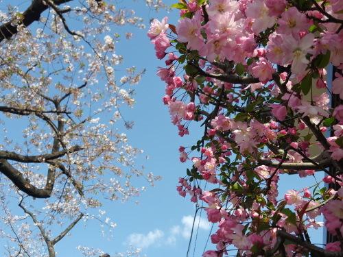 桜も民主主義も E・レナード「オンブレ」_e0016828_10203247.jpg