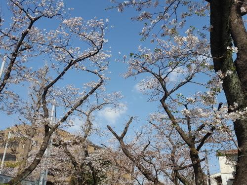 桜も民主主義も E・レナード「オンブレ」_e0016828_10205327.jpg