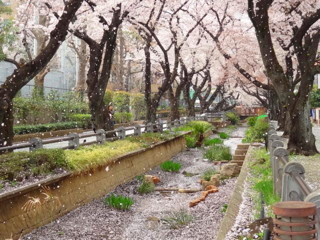 桜も民主主義も E・レナード「オンブレ」_e0016828_10360356.jpg