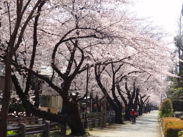 桜も民主主義も E・レナード「オンブレ」_e0016828_10363246.jpg