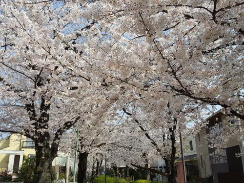 桜も民主主義も E・レナード「オンブレ」_e0016828_10542872.jpg