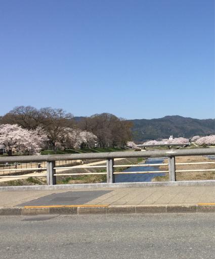 鴨川の桜_c0223630_12401515.jpg