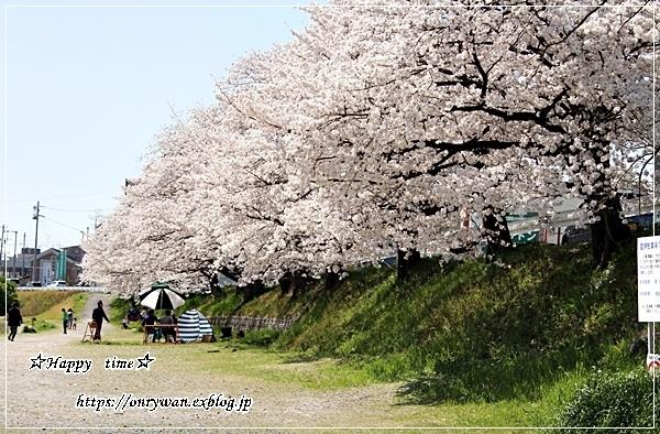 ちらし寿司弁当と地元の桜♪_f0348032_17374616.jpg