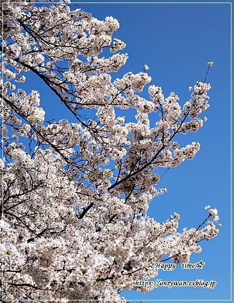 ちらし寿司弁当と地元の桜♪_f0348032_17380164.jpg