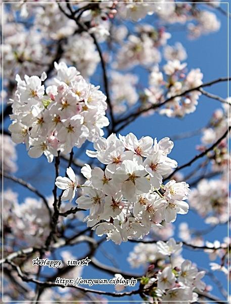 ちらし寿司弁当と地元の桜♪_f0348032_17381777.jpg