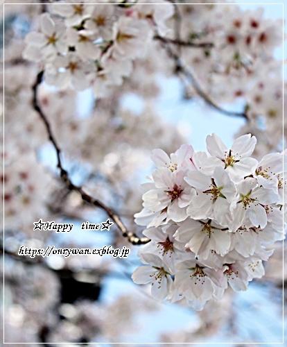 ちらし寿司弁当と地元の桜♪_f0348032_17383128.jpg