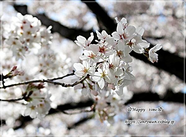 ちらし寿司弁当と地元の桜♪_f0348032_17384498.jpg