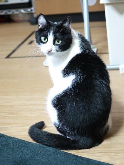 猫のお留守番 ココちゃん編。_a0143140_22423909.jpg