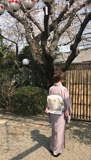 北野をどり・桜の下の着物姿・京都の桜も今週末が見頃_f0181251_1815167.jpg