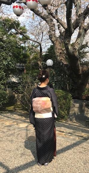 北野をどり・桜の下の着物姿・京都の桜も今週末が見頃_f0181251_18234790.jpg