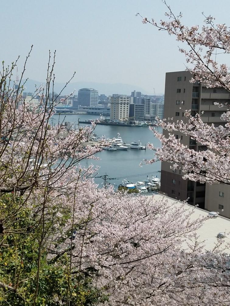 ❤ 満開の桜に会いに・・・_b0313261_14555437.jpg