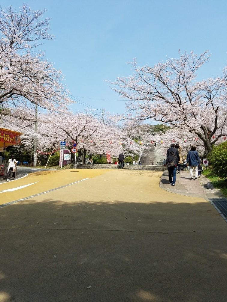 ❤ 満開の桜に会いに・・・_b0313261_15101080.jpg