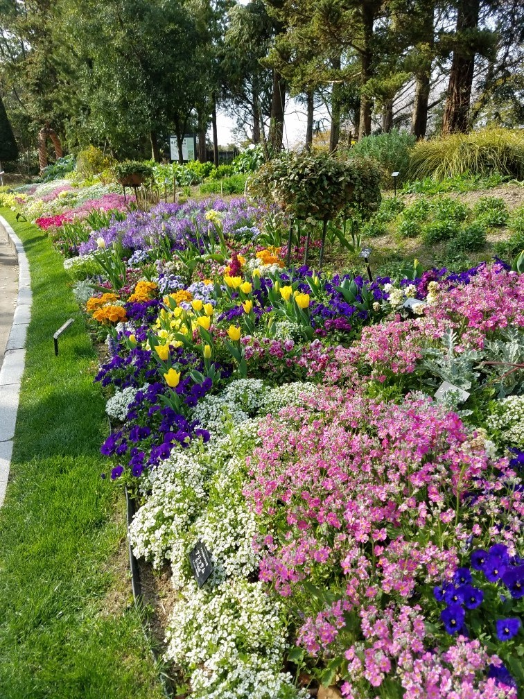❤ 春の植物園へ・・・!_b0313261_15264934.jpg