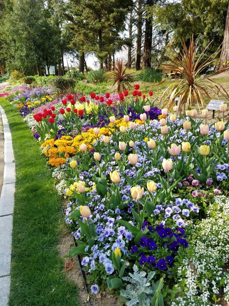 ❤ 春の植物園へ・・・!_b0313261_15273520.jpg