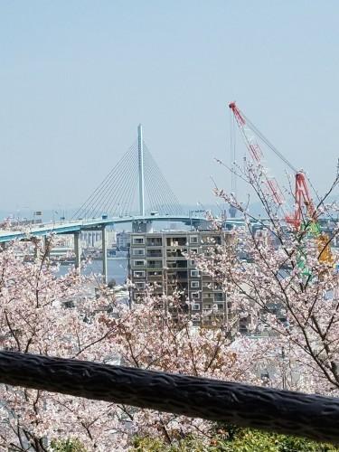 ❤ 満開の桜に会いに・・・_b0313261_18392281.jpg