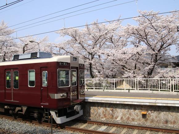 阪急上桂駅 ソメイヨシノ 阪急6351F_d0202264_51565.jpg