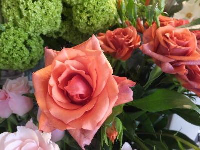 オークリーフ(市川バラ園さんの薔薇の花たち)_f0049672_19230253.jpg
