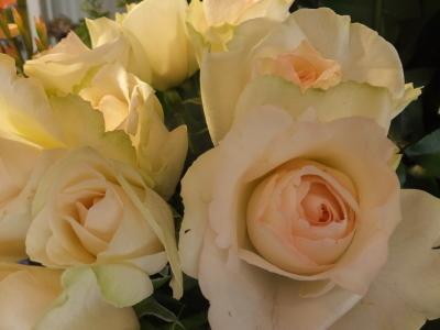 オークリーフ(市川バラ園さんの薔薇の花たち)_f0049672_19240530.jpg