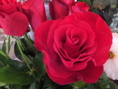 オークリーフ(市川バラ園さんの薔薇の花たち)_f0049672_19241508.jpg