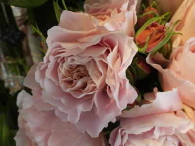 オークリーフ(市川バラ園さんの薔薇の花たち)_f0049672_19242550.jpg