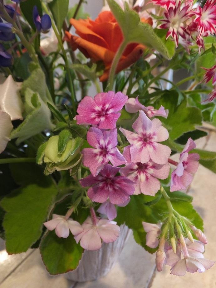 オークリーフ花の教室(さねゆきくんの作品)_f0049672_19445321.jpg
