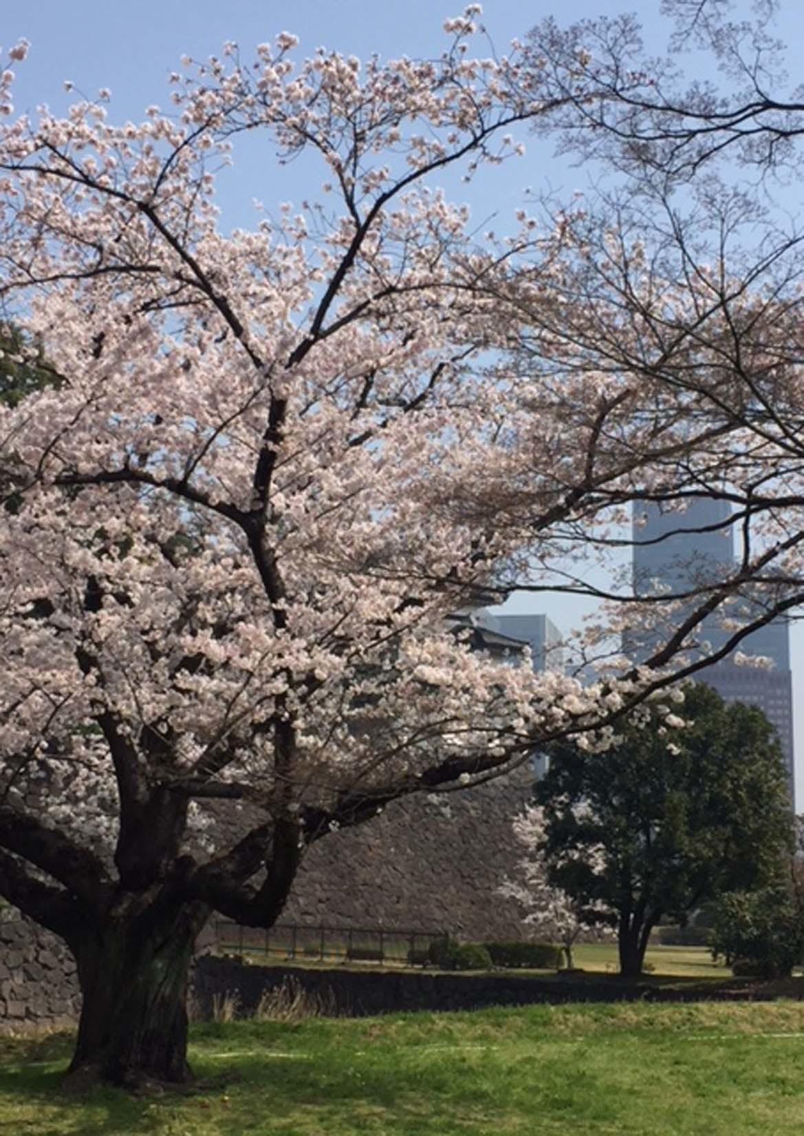 東京 2/2_e0215179_11262441.jpg