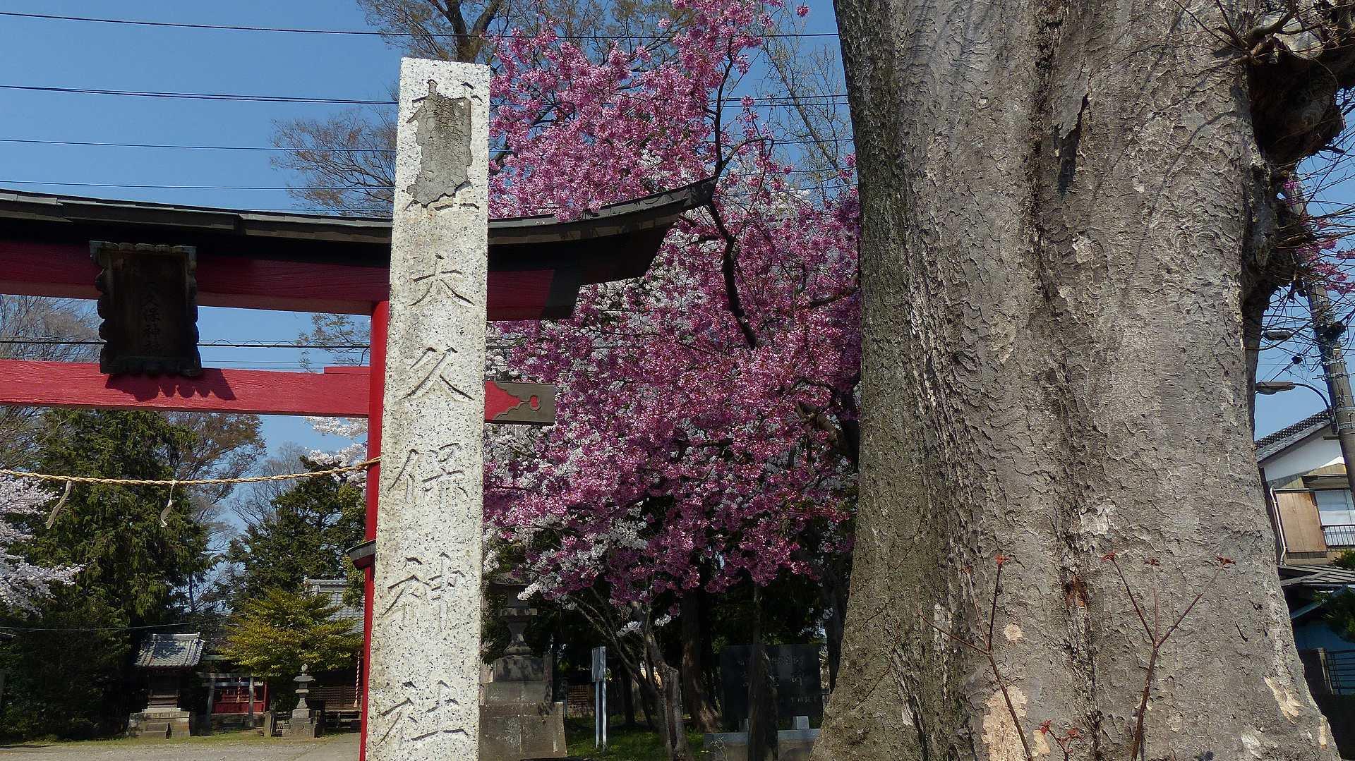 お寺の次は神社です_a0185081_10024353.jpg