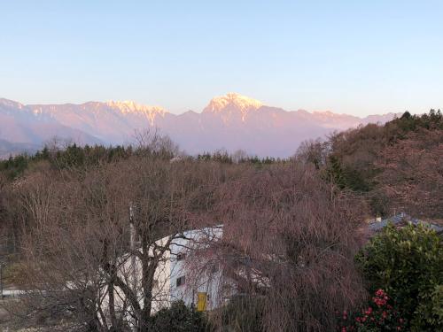 >志満屋の桜が開花。_d0338282_06151782.jpg