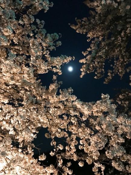 夜桜月_e0128485_01245889.jpg