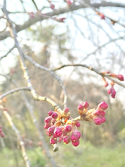 春爛漫~🌸_c0165589_18261164.jpg