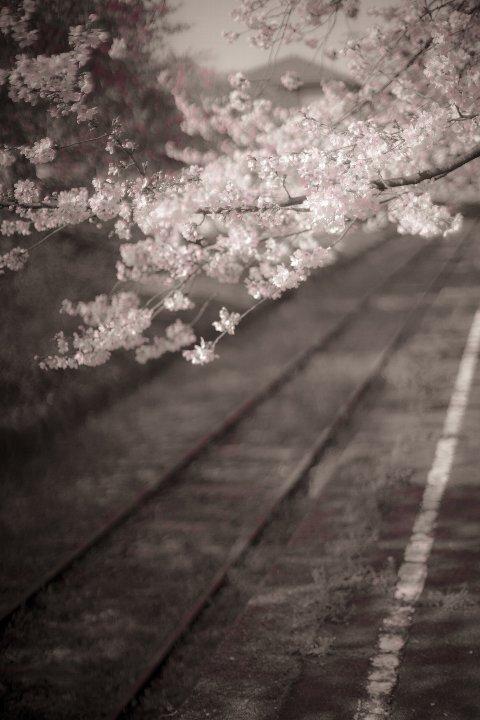 また春が巡ってきた廃駅_d0353489_20391983.jpg