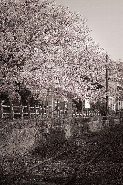 また春が巡ってきた廃駅_d0353489_20393086.jpg