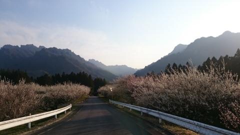 春本番_c0066693_15055710.jpg