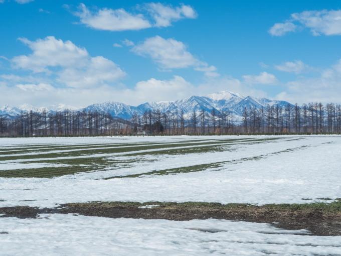 エゾリス君も感じる春の陽気・・みるみるうちに雪どけが進みます。_f0276498_21563441.jpg