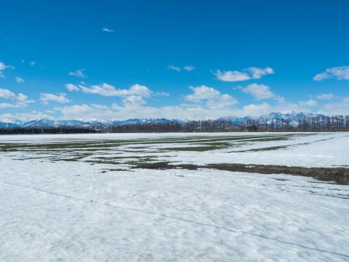 エゾリス君も感じる春の陽気・・みるみるうちに雪どけが進みます。_f0276498_21574133.jpg