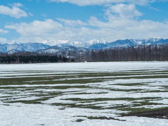 エゾリス君も感じる春の陽気・・みるみるうちに雪どけが進みます。_f0276498_21584686.jpg