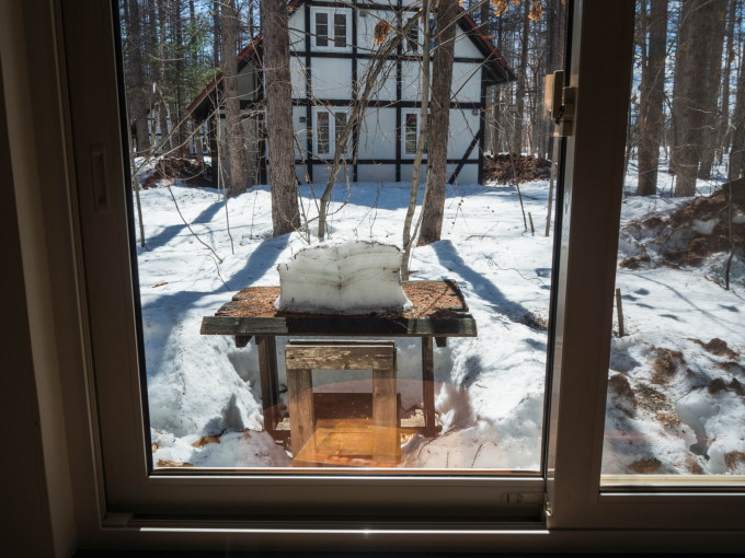 エゾリス君も感じる春の陽気・・みるみるうちに雪どけが進みます。_f0276498_21595975.jpg