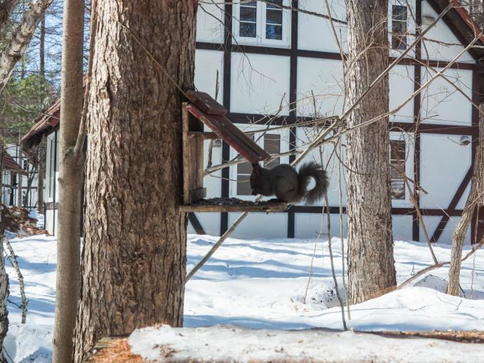 エゾリス君も感じる春の陽気・・みるみるうちに雪どけが進みます。_f0276498_22021464.jpg