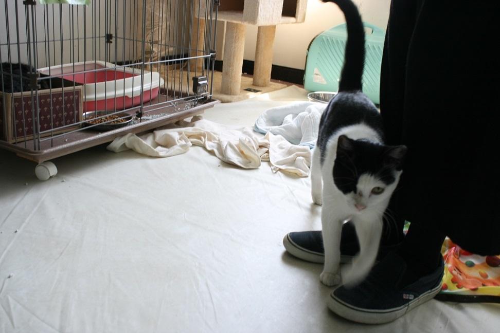 【猫・移動先募集】多頭崩壊16匹他_f0242002_20200237.jpg
